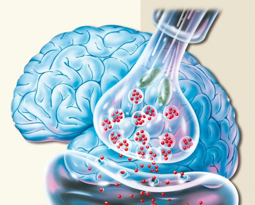 Nervensynapse; Illustration
