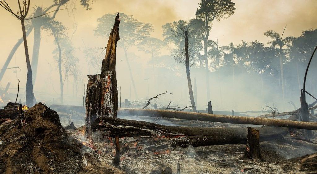 Brandrodung im Amazonas-Regenwald